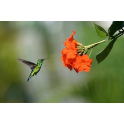 Fotomural colibrí
