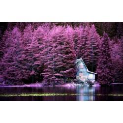 Fotomural árboles rosados