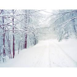 Fotomural bosque con nieve