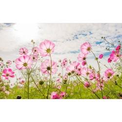 Fotomural flores de primavera
