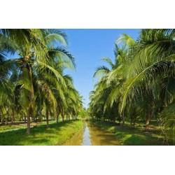 Mural en vinilo Coconut field