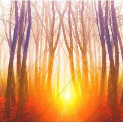 Mural floresta al amanecer