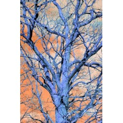 Fotomural árbol seco