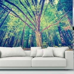 Fotomural árbol en el bosque