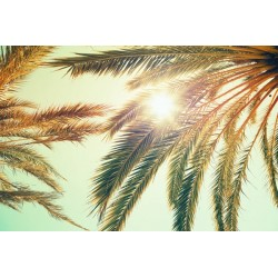 Fotomural palmeras soleadas
