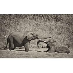 Mural de pared elefantes