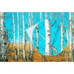 Fotomural árboles 5