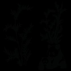 Vinilo de pandas