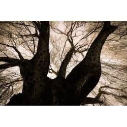 Fotomural bajo el árbol