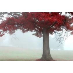Mural campo con niebla