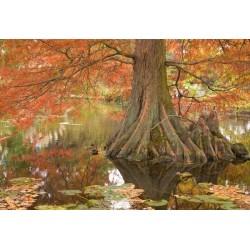 Mural árbol del pantano
