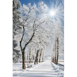 Fotomural nieve en el parque
