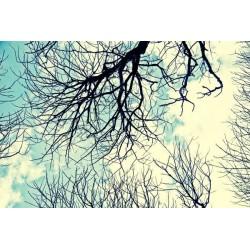 Fotomural árboles secos