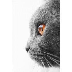 Mural decorativo gato gris