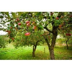 Mural en vinilo árbol con frutos