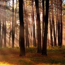 Vinilo sol entre árboles