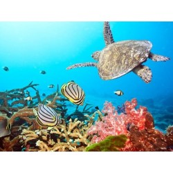 Fotomural tortuga y peces