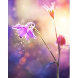 Vinilo de mesillas flores del campo