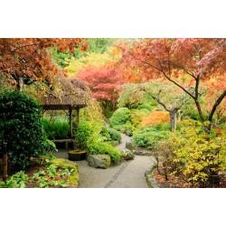 Fotomural jardín botánico