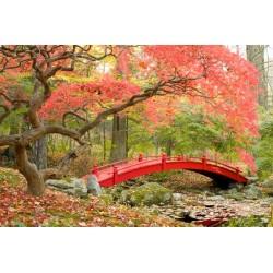 Fotomural bosque en China