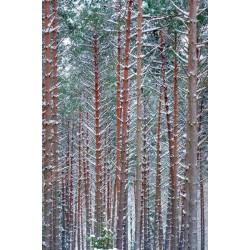 Fotomural árboles 4