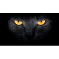 Fotomural gato negro