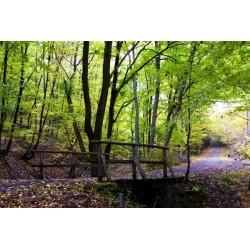 Fotomural bosque en otoño