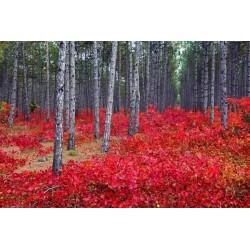 Fotomural floresta primavera