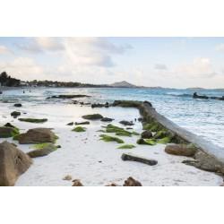 Fotomural de playa con rocas