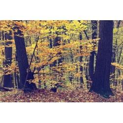 Mural en vinilo floresta otoño