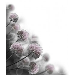 Fotomural flores del campo 2