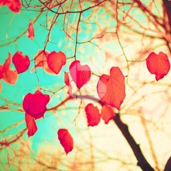 Mural en vinilo hojas corazones