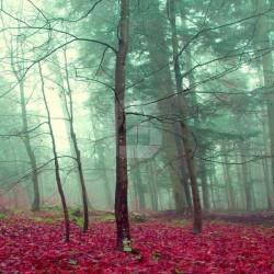 Fotomural bosque con niebla