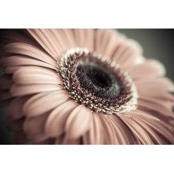 Fotomural de flores vintage