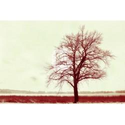 Mural en vinilo árbol sin hojas