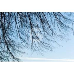 Mural decorativo cielo azul