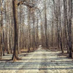 Fotomural camino en el bosque