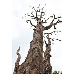 Mural decorativo árbol talado