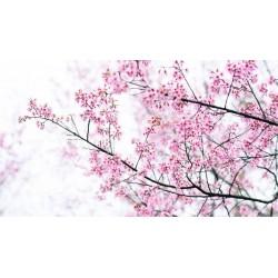 Fotomural árbol en flor
