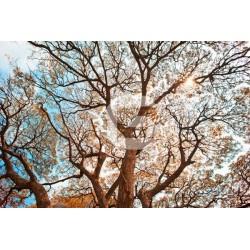 Mural decorativo árboles 7