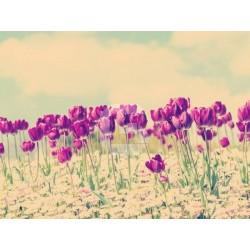 Fotomural campo de tulipanes
