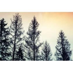 Fotomural noche en el bosque