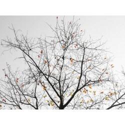 Mural decorativo árbol otoño