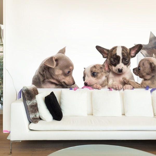 Fotomural perritos