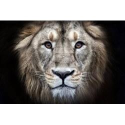 Fotomural cabeza de león 1