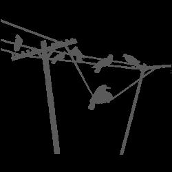 Vinilo decorativo palomas