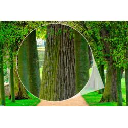 Fotomural efecto profundidad árboles