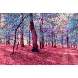 Fotomural paisaje de otoño