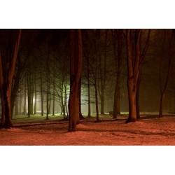 Fotomural de floresta de noche