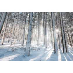 Fotomural nieve en el bosque